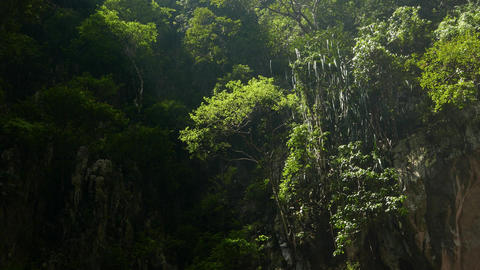 Green bushes and trees on vertical cave side, sunlight and shadow Footage