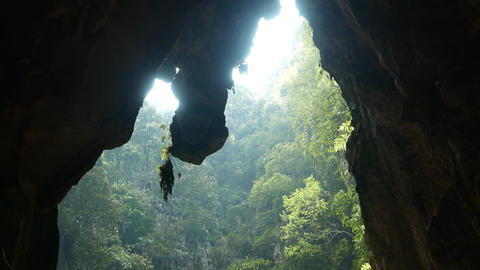 Cave opening and stalactite with plant, against greenery walls Live Action