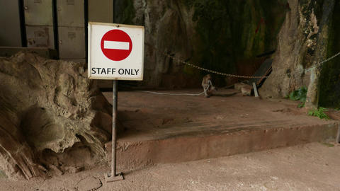 Funny monkey behind staff only sign, aggressive jumps to camera Footage