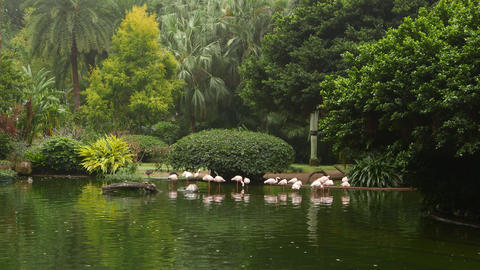 Beautiful trees in park, pond and flamingoes standing on one leg in water Footage