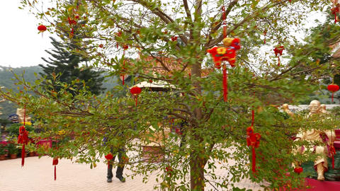 Decorated tree and pagoda at Main Plaza in Buddhist temple Footage