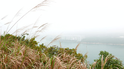 Vegetation on hillside, view from heights to fishermen huts at foot of the hill Footage