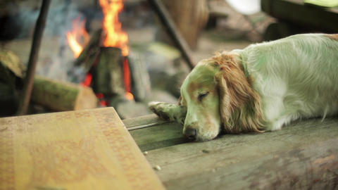Reddish dog sleep on wooden surface. Campfire on background. Summer. No people Footage