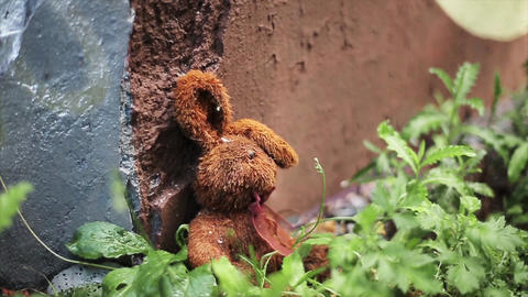 Lost brown plush hare at concrete wall and green grass. Summer. Nobody Footage