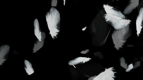 Feather 20 Animation