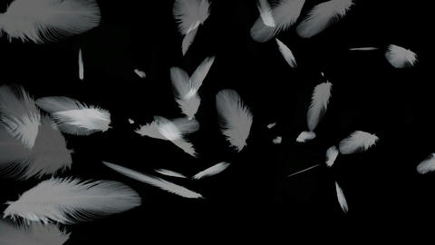 Feather 24 Animation