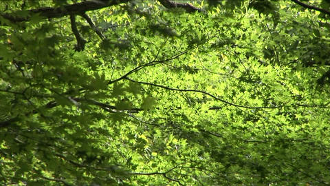 Leaves rustling in the wind Stock Video Footage