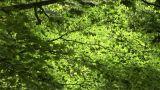 Leaves rustling in the wind Footage