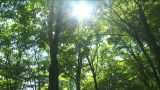 Sunlight filtering through the trees Footage