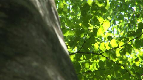 Tree trunk Stock Video Footage