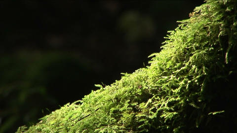 Tree trunk Stock Video Footage