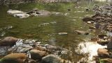 Forest Сreek Сlose Up 04 Footage