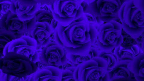Rose 723143 Animation