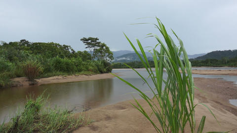 Ecuador River Grass Blowing in the Wind on a Rainy Day Stock Video Footage