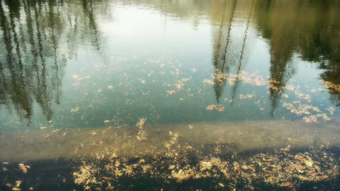 Forest reflection in water,metasequoia leave floating on... Stock Video Footage