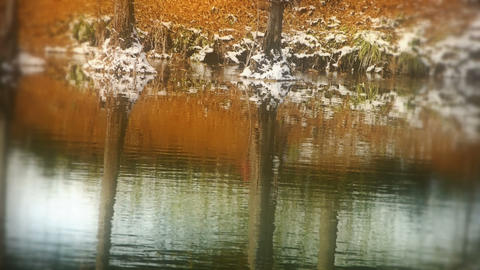 Forest reflection in water,ripple,snow Stock Video Footage