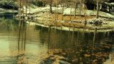 Forest reflection in water,metasequoia leave floating on lake,ripple,snow Footage