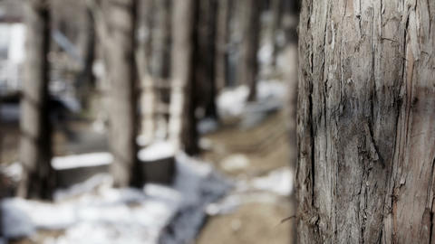 Green forest trunk in winter Stock Video Footage