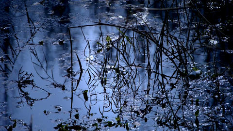 Forest and branches reflection in swamps wetlands water,Sparkling ripple,snow Footage