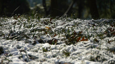 Snow covered grass,swaying in wind,Woods tree and jungle Stock Video Footage