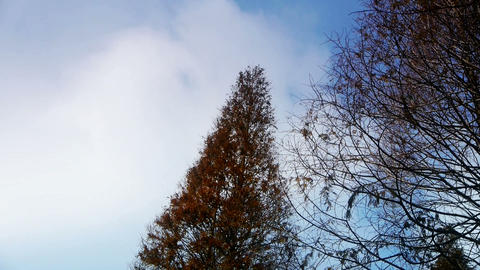 Flowing clouds,Trees crown sway in... Stock Video Footage