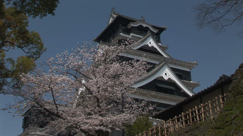 Kumamoto Castle and the cherry tree Stock Video Footage
