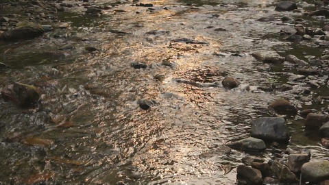 Stream in sunset light Stock Video Footage