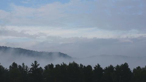 Misty Forest Skyline Timelapse Stock Video Footage