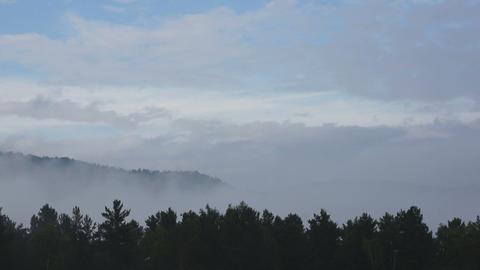 Misty Forest Skyline Timelapse Footage