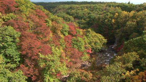 Autumnal tints Stock Video Footage