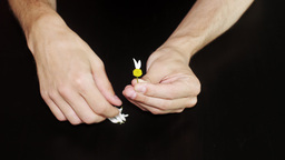 Daisy divination. Man's hands on black background Live Action