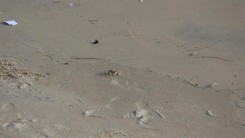 Sand crabs on the beach Live Action