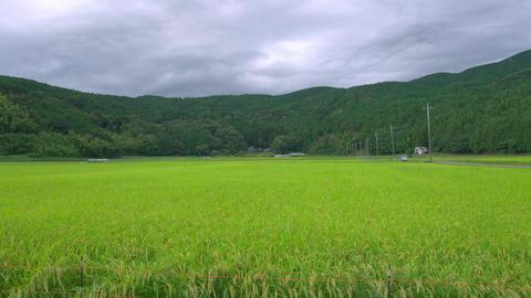4K 日本の水田 RAW Recording Footage