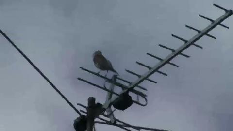 Live Painting, Bird Sitting On Tv Antenna Footage