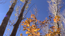 Nature (4) stock footage
