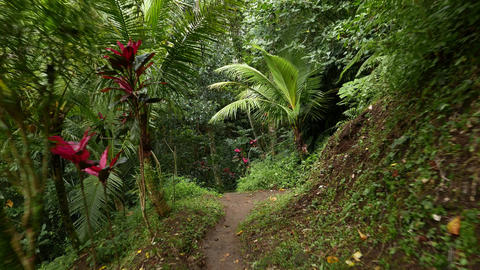 walking along tropical forest path hillside, river water sound, lush vegetation Footage