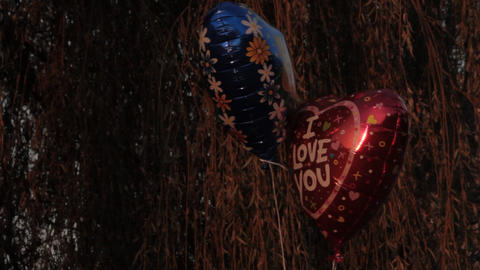 "Ungraded: Heart-Shaped Ballons With Caption ""I Love You"" and Picture of Teddy Footage"