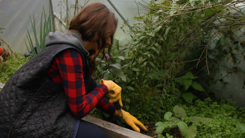 Pretty Young Woman Gardening stock footage