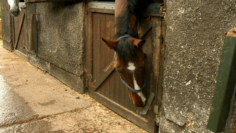 Clever Horse Opening The Stable stock footage