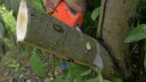 Electric power saw cutting off tree brunch Footage