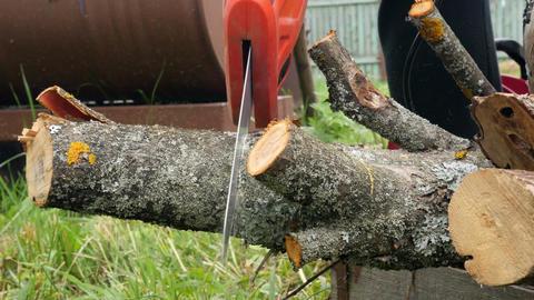Lumberjack Working With Saw Footage
