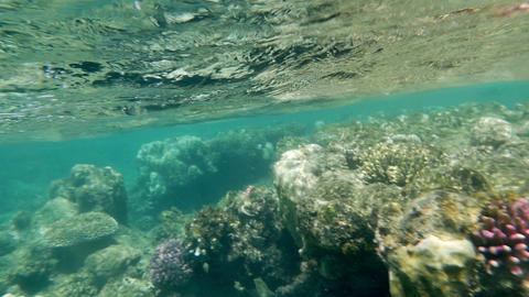 Coral reefs in shallow sea water Footage