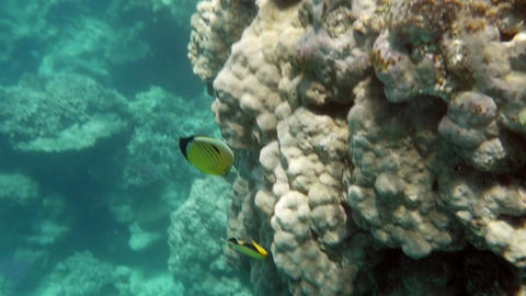 Coral Reef and Tropical Fishes Lit with the Sun Footage