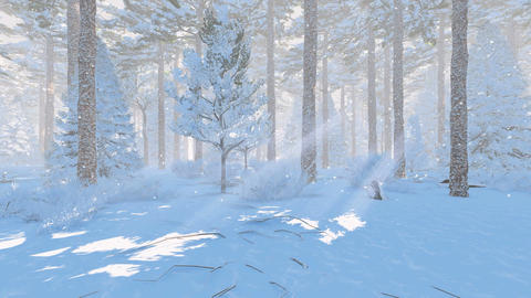 Winter pine forest at snowfall day Footage