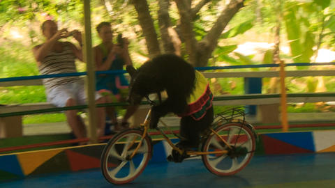 bear in skirt rides on bike in outdoor circus performance park Footage