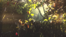 4K Romantic Autumn Morning in Small Garden 2 stylized Footage