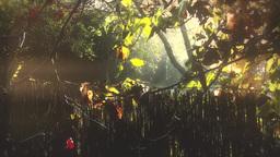 4K Romantic Autumn Morning in Small Garden 2 stylized Footage