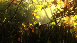 4K Romantic Autumn Morning in Small Garden 4 stylized Footage