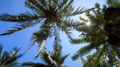 wind shakes palm branches against blue sky sun disk Footage
