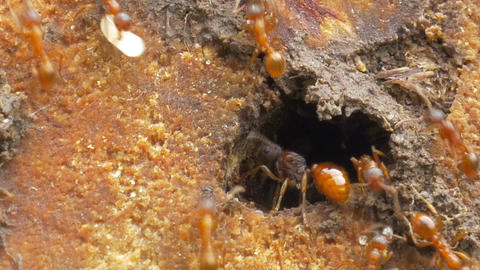 Life of ant colony Footage